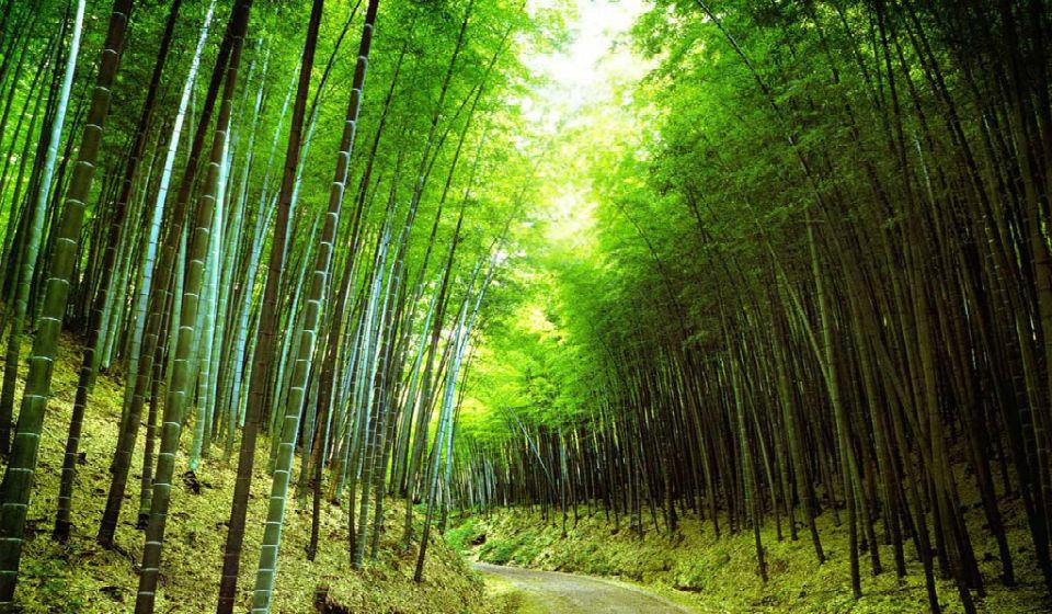 Como o bambu pode transformar sua Vida com Reiki