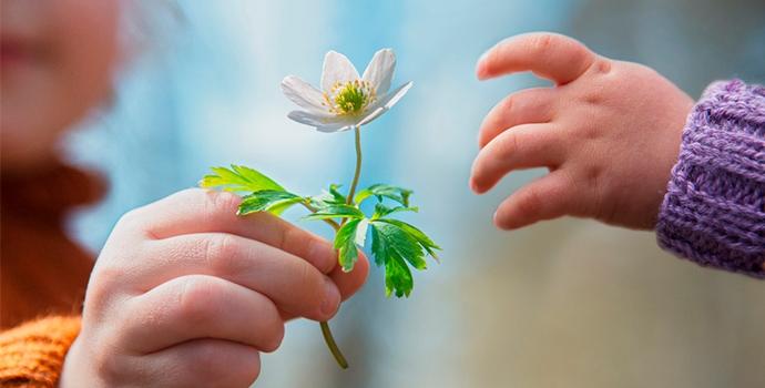 Principios do Reiki – O Poder da Gratidão